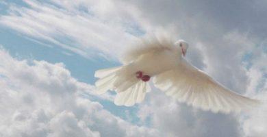 que es la gracia divina